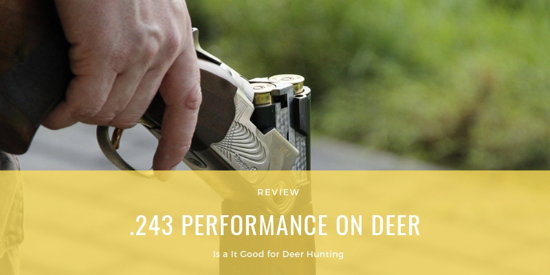 .243 PERFORMANCE ON DEER