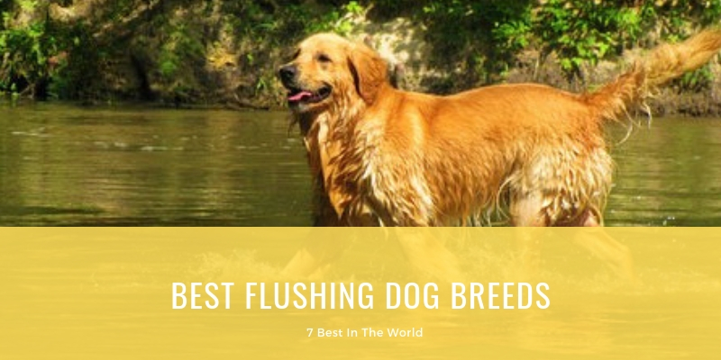 BEST FLUSHING DOG BREEDS