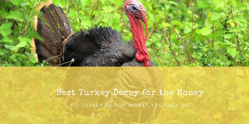 Best Turkey Decoy for the Money