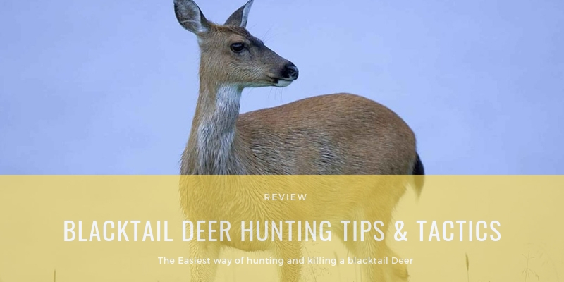 Blacktail Deer Hunting Tips & Tactics