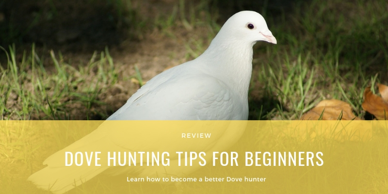 DOVE HUNTING TIPS FOR BEGINNERS