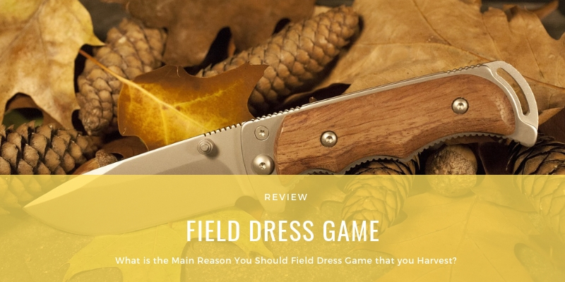 What is the Main Reason You Should Field Dress Game that you Harvest?