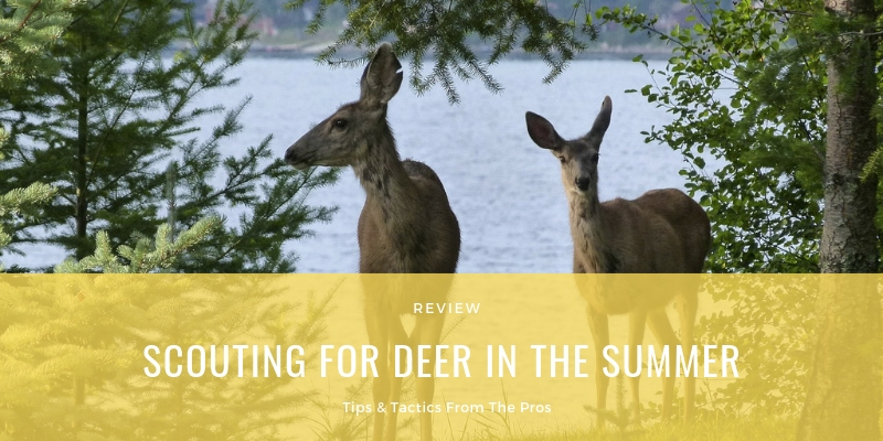 SCOUTING FOR DEER IN THE SUMMER
