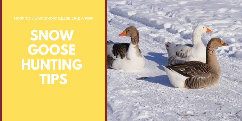 SNOW GOOSE HUNTING TIPS