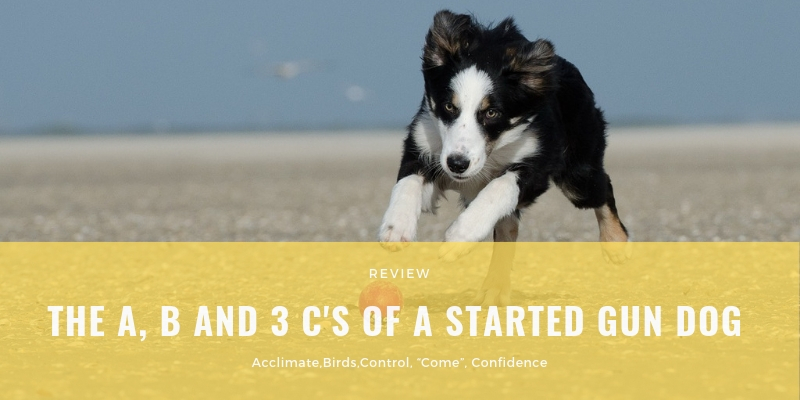 THE A, B AND 3 C'S OF A STARTED GUN DOG