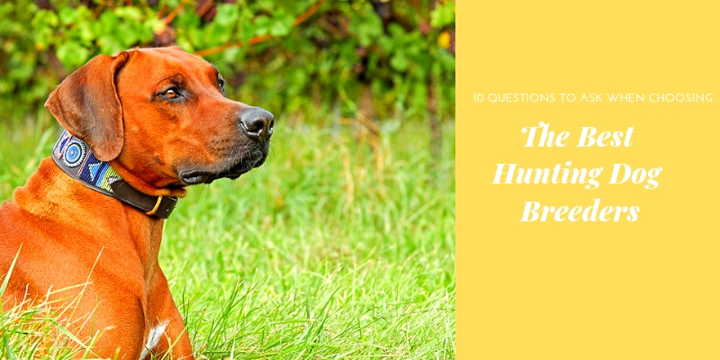 The Best Hunting Dog Breeders