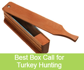 best box call for turkey hunting