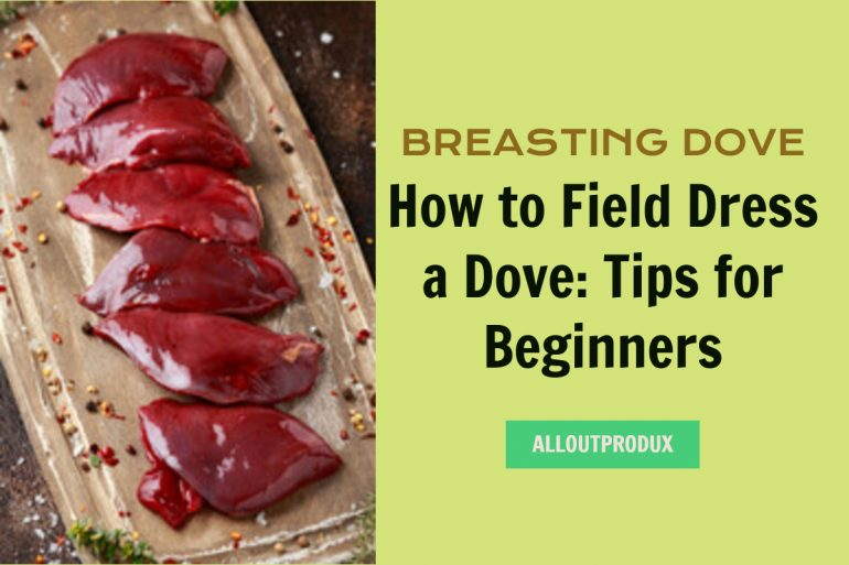 How to Field Dress a Dove: Tips for Beginners
