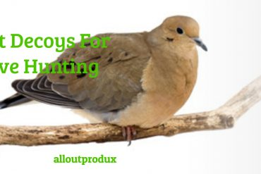 Best Decoys For Dove Hunting