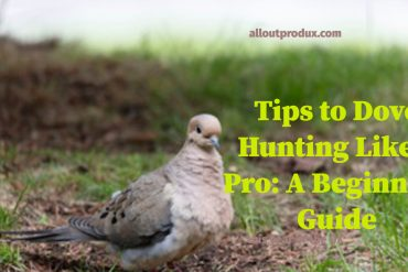 Tips To Dove Hunting Like A Pro: A Beginners Guide